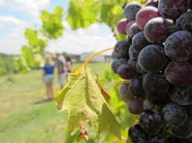 Winerie  Louisville - City Guide broad run vineyards