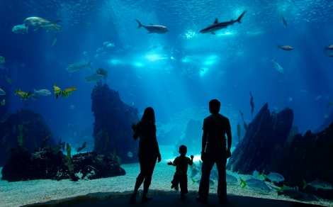 aquarium_of_the_pacific