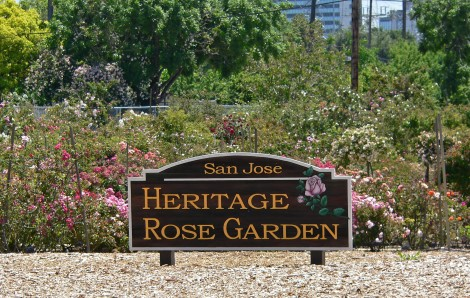 San_Jose_Heritage_Rose_Garden_view_1